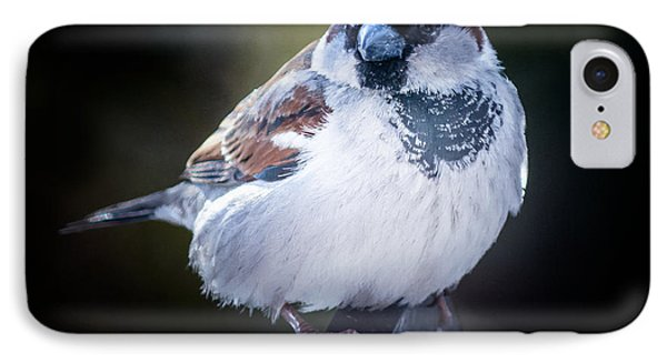 House Sparrow  IPhone Case by Kenneth Cole