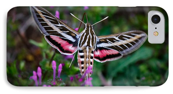 Hummingbird Moth Print IPhone Case