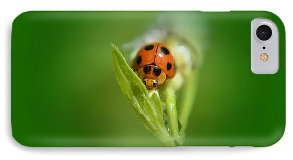 IPhone Case featuring the photograph  Ladybug by Michelle Meenawong