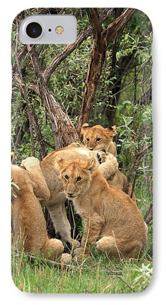 Masai Mara Lion Cubs IPhone Case by Aidan Moran