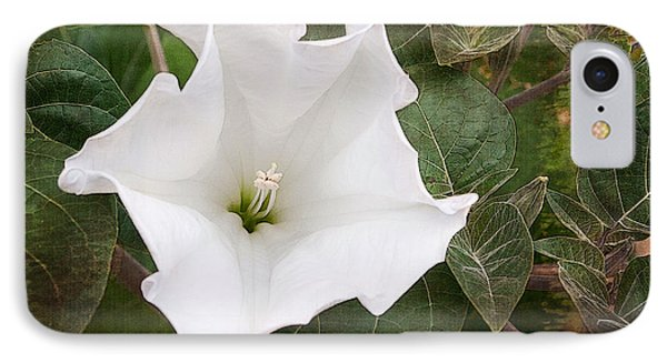 IPhone Case featuring the photograph  Moonflower by Terri Harper