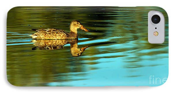 Northern Shoveler Duck IPhone Case by Robert Bales