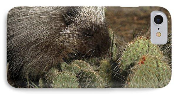 Porcupine-animals-image-1 IPhone Case by Wildlife Fine Art