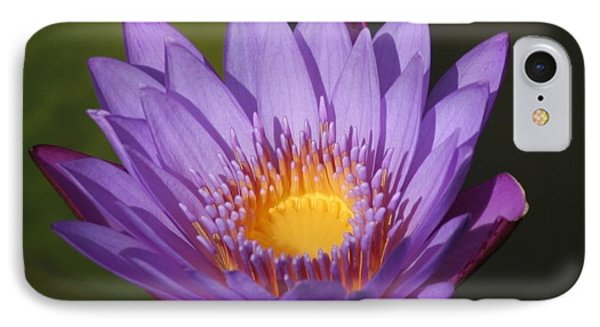 Purple Water Lily IPhone Case by Karen Silvestri