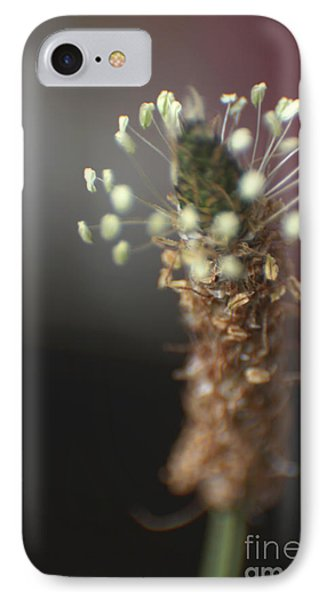 IPhone Case featuring the photograph  Ribwort Plantain Flower by Eden Baed