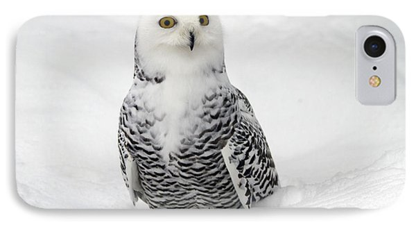 Snowy Owl Bubo Scandiacus IPhone Case by Lilach Weiss