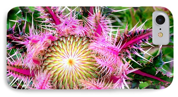IPhone Case featuring the photograph  Texas Thistles by Antonia Citrino