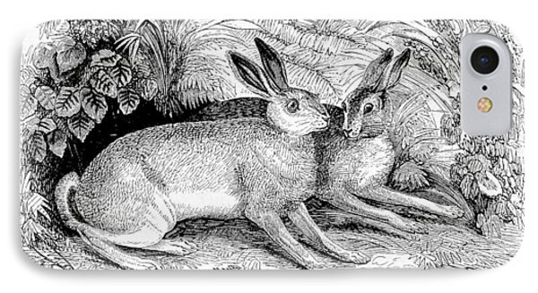 Two Hares IPhone Case by Michael Dohnalek