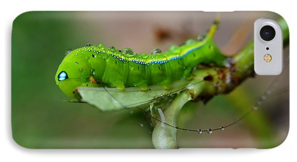 IPhone Case featuring the photograph  Wet Caterpillar by Michelle Meenawong