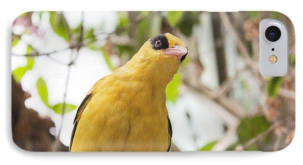 Yellow Songbird IPhone Case
