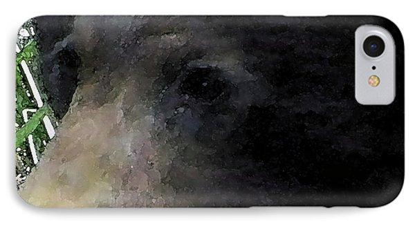 01042014 Black Bear Alaska IPhone Case by Garland Oldham