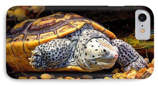 Sea Turtle IPhone Case by Savannah Gibbs