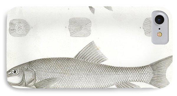 1-4. Catostomus Sucklii IPhone Case