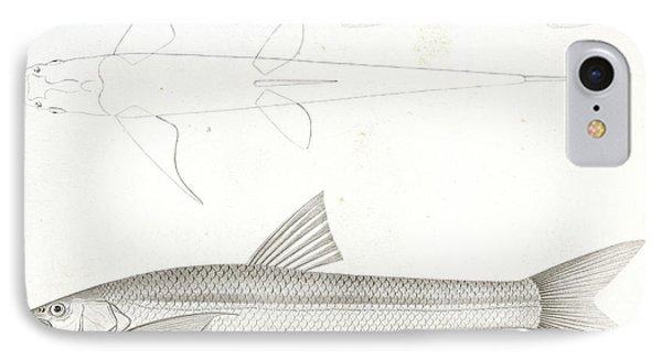 1-6. Pogonichthys Communis IPhone Case