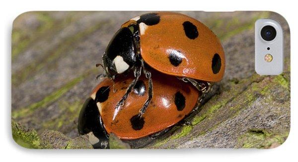 7-spot Ladybirds IPhone Case by Nigel Downer