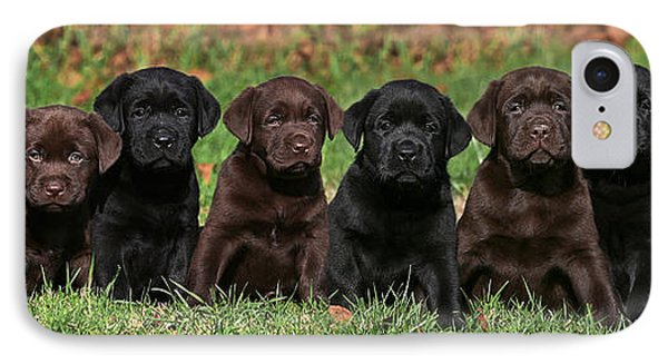 8 Labrador Retriever Puppies Brown And Black Side By Side IPhone Case by Dog Photos