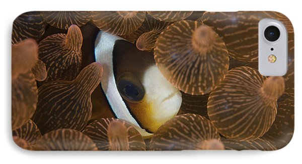 A Clarks Anemonefish Nuggles IPhone Case by Ethan Daniels