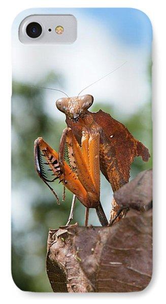 A Dead Leaf Mantis IPhone Case by Scubazoo