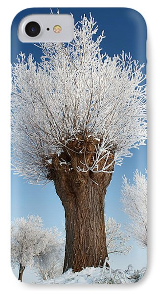 A Frosted Willow On A Very Cold And Bright Winter Day IPhone Case