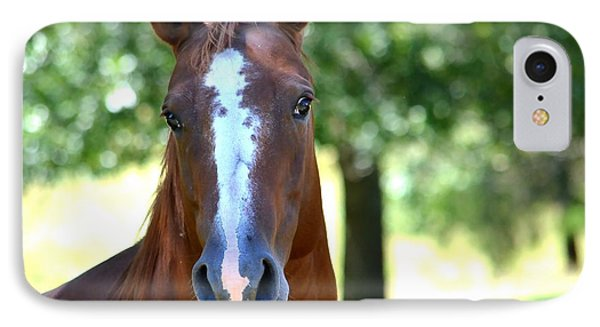 A Horse Is A Horse IPhone Case by Deena Stoddard