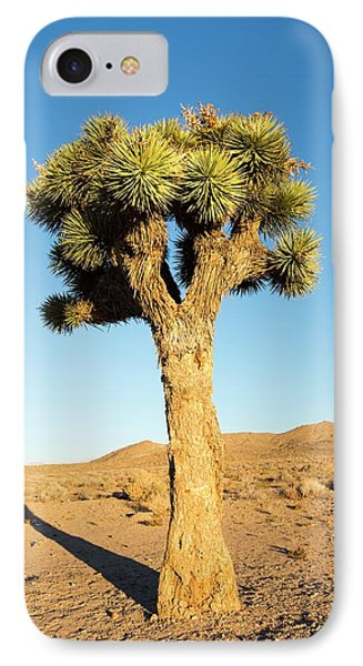 A Joshua Tree IPhone Case by Ashley Cooper