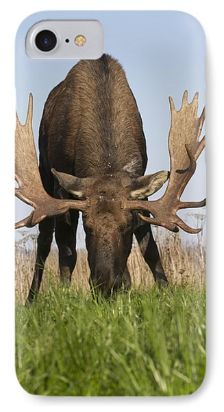 A Large Bull Moose Feeds Near Point Phone Case by Doug Lindstrand
