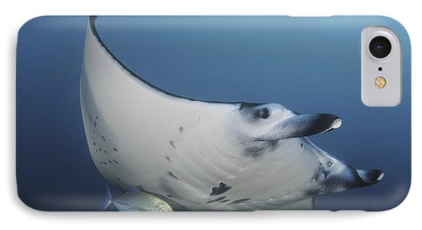 A Reef Manta Ray Swimming In Komodo IPhone Case