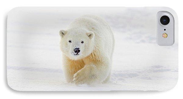 A Yearling Polar Bear Cub Plays IPhone Case by Hugh Rose