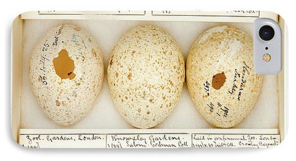 Agriocharis Ocellata Eggs IPhone Case