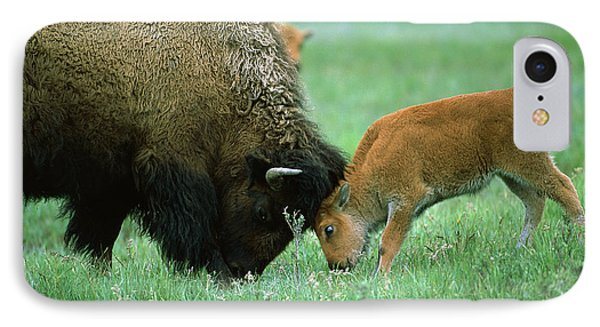 American Bison Cow And Calf Phone Case by Suzi Eszterhas