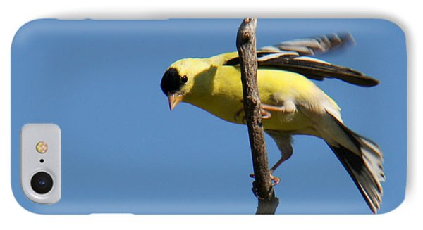 American Goldfinch Phone Case by Bob and Jan Shriner
