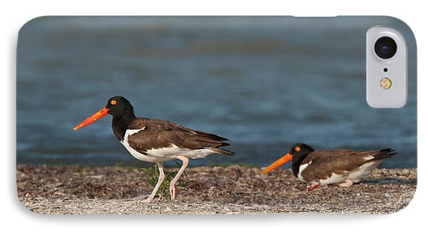 American Oystercatcher (haematopus IPhone Case by Larry Ditto