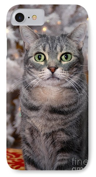 American Shorthair Cat With Holiday Tree IPhone Case by Amy Cicconi