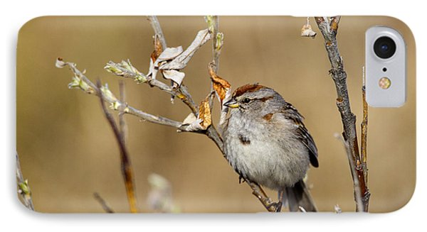 American Tree Sparrow IPhone Case by Doug Lloyd