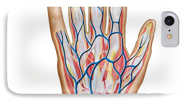 Anatomy Of Back Of Human Hand Phone Case by Stocktrek Images
