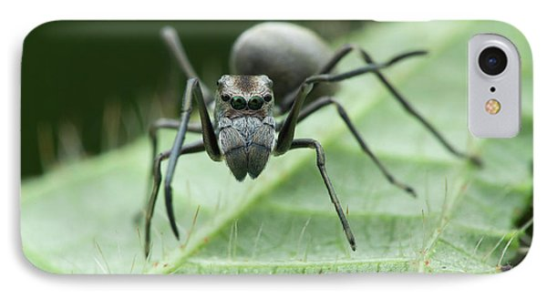 Ant Mimic Jumping Spider IPhone Case