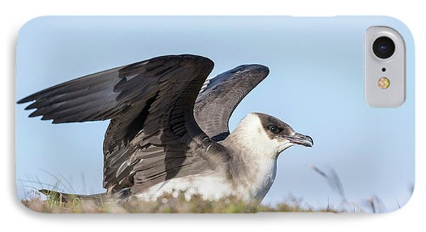 Arctic Skua Or Parasitic Jaeger Or IPhone Case by Martin Zwick