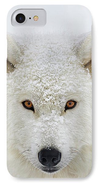 Arctic Wolf  Canis Lupus Arctos IPhone Case by Dominic Marcoux
