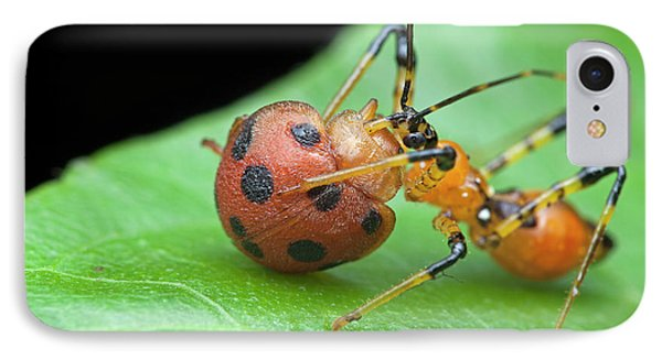 Assassin Bug Nymph Eating Ladybird IPhone Case by Melvyn Yeo