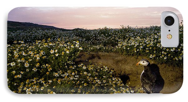 Atlantic Puffin At Burrow Skomer Island IPhone Case by Sebastian Kennerknecht