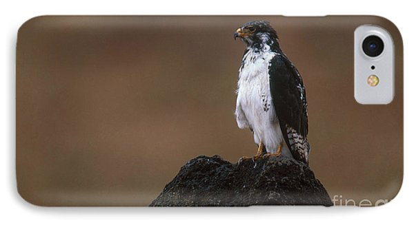 Augur Buzzard IPhone Case by Art Wolfe