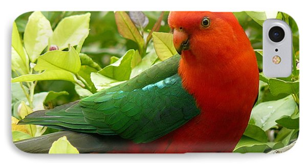 IPhone Case featuring the photograph Australian King Parrot by Margaret Stockdale