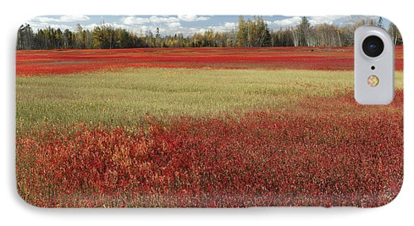 Autumn Blueberry Field Maine Phone Case by Scott Leslie