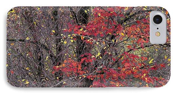 Autumn's Palette IPhone Case by Alan L Graham