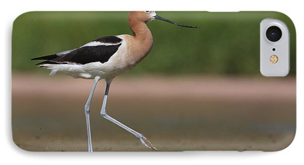 IPhone Case featuring the photograph Avocet Out For A Walk by Ruth Jolly