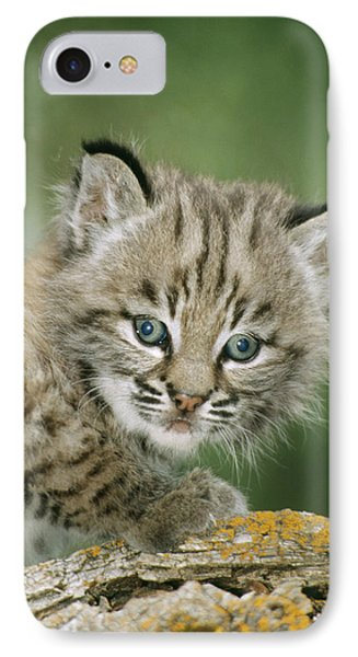Baby Bobcat IPhone Case by M. Watson