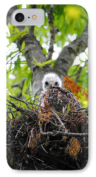Baby Red Shouldered Hawk In Nest IPhone Case by Jai Johnson
