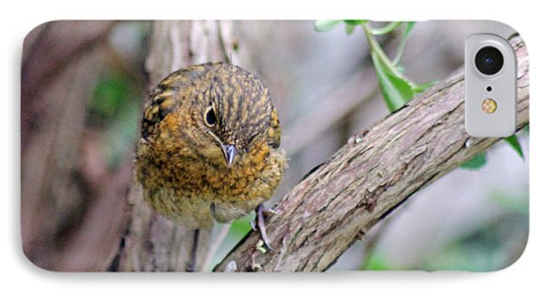 Baby Robin IPhone Case by Tony Murtagh