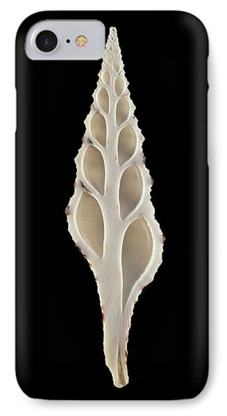 Babylon Turrid Sea Snail Shell IPhone Case by Gilles Mermet