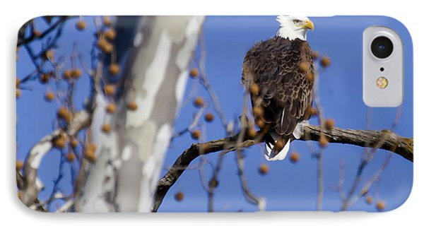 IPhone Case featuring the photograph Bald Eagle 2 by David Lester